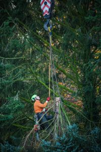 Tree Risk Assessment Methods Comparison
